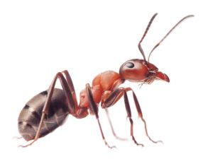 Подготовка помещений для обработки от домовых муравьев